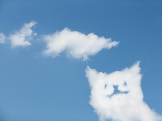 e198dc823ac718b44f6654e1f338fe07_s 猫って好き? どこからきたの?