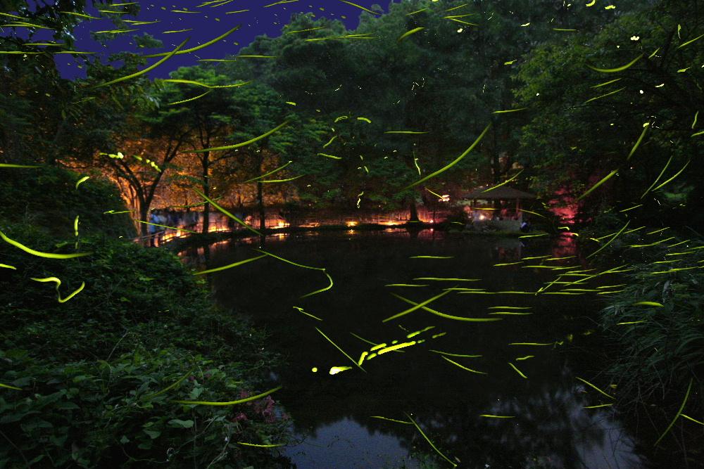 img_100296_1 「ほたる観賞の夕べ」静岡県 大川温泉の竹ケ沢公園